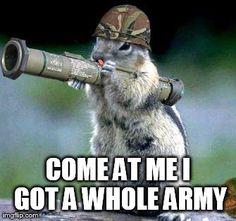 Bazooka Squirrel Meme Generator - Imgflip