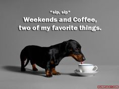weekends-and-coffee.jpg #Dachshund #doxiedarlin'