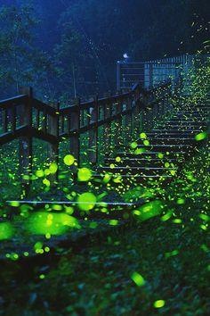 Stairs of firefly, Taiwan