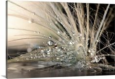 Great Big Canvas 'Pearls by Maryam Zahirimehr Photographic Print Format: Canvas, Size: H x W x D Painting Prints, Wall Art Prints, Canvas Prints, Framed Prints, Paintings, White Stain, Roller Shades, Art Mural, Stained Glass Art