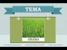 Beneficios, nutrientes y propiedades de la grama. Más información en: http://www.remediocaseronatural.com/comidas-sanas-beneficios-grama.htm