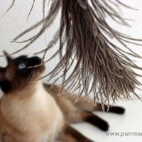 big bird: cat toy with bombastic natural ostrich feather - shop at www.purrmania.de