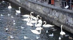Touristen Bird, Youtube, Animals, Animaux, Birds, Animal, Animales, Youtubers, Youtube Movies