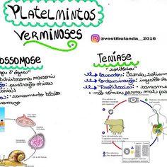 #mapasbiologiabrenda