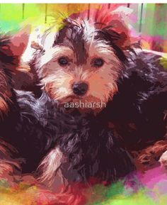 #Yorkshire #Terrier #Puppies Sitting #Colorful
