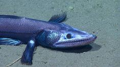 "Deep sea explorers find mysterious creatures and one ""horror"" off Carolinas coast (VIDEO)   protothemanews.com"