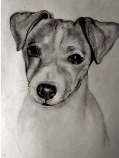 My little rudy , drawn by my son Dog Anatomy, Dog Coloring Page, Jack Russells, Rat Terriers, Dog Rules, Little Critter, Amazing Drawings, Jack Russell Terrier, Baby Dogs
