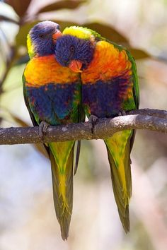 Very nice Lovely Parrot Very cute parrot in beautiful nature… Kinds Of Birds, All Birds, Love Birds, Tropical Birds, Exotic Birds, Colorful Birds, Pretty Birds, Beautiful Birds, Animals And Pets