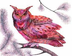 Cranberry Owl  wild bird watercolor art print size by TevaGallery