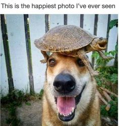 FunRare funny and cute animal pictures of the day release 8 that has 57 funniest animal pics. Funny animal photos with captions are for those who love cute dogs, silly animals, cute cats, and animals doing strange things. Funny Animal Photos, Funny Animal Jokes, Funny Dog Memes, Cute Animal Pictures, Cute Funny Animals, Animal Pics, Funniest Memes, Cat Memes, Cute Animal Humor