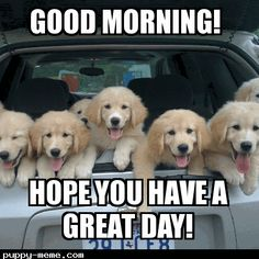 Related Keywords & Suggestions for happy birthday puppy meme Good Morning Dog, Funny Good Morning Memes, Good Morning Handsome, Morning Coffee, Good Morning Animals, Monday Morning, Happy Birthday Puppy, Dog Birthday, Happy Birthday Golden Retriever