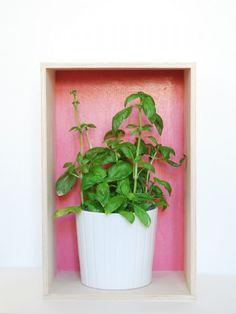 Plants, Home Ideas, Storage, Plant, Planets