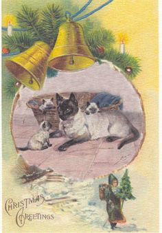 Siamese cat and kittens Christmas Card