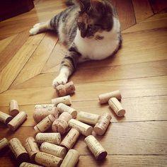 L'air de rien... #planeteliege #bouchon #liege #vin #wine #cork #Repost from @Very Wine Trip --- En voilà une qui a trouvé une nouvelle occupation : gardienne des bouchons !