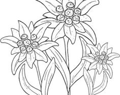 Edelweiss Printed Embroidery / Cross stitch Pattern on Fabric  (Embroidery, Needpoint, Needlecraft, Craft)