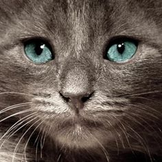 Nine Signs You Need to Take Your Cat to the Vet | Catster