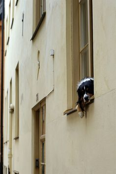 Dog in the window, Photo by: Emil N. Nylander ©