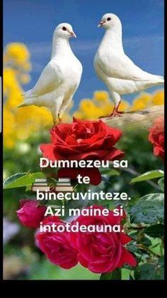 Bird, Birds