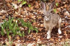 how to keep rabbits and other animals out of your garden, humanely, organically, frugally, and sustainably.