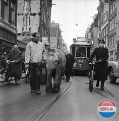The elephant Murugan, Weesperstraat, Amsterdam, 1955 photo by Ben Meerendonk I Amsterdam, Amsterdam Netherlands, Types Of Photography, Street Photography, White Photography, Papa Dont Peach, Photo B, City Life, Old Pictures
