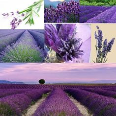 do yourself a favour… sometime go and do a Google images search of the word lavender.  In  looking for these photos ~ I had a pretty and purpley feast for the eyes!  ♥