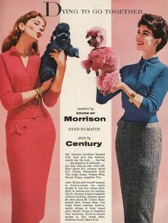 Colour your poodle to match your sweater 1950s style #vintage #fifties