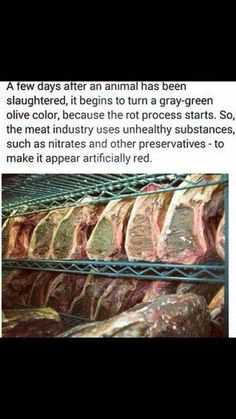 Most carnists are scavengers, dining on dead bodies sometimes long after the animals were killed. It is most probably the case that humans are not biological scavengers; they are socially conditioned scavengers. ~KK