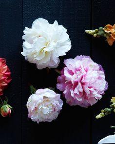 Peony Flower Stems -