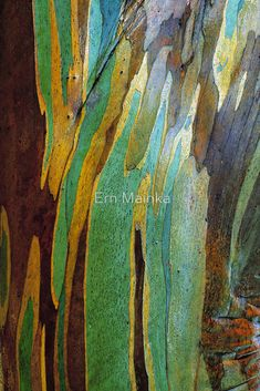 'Snow Gum Bark' Poster by Ern Mainka - Taraab Shaheed Patterns In Nature, Textures Patterns, Colors Of Nature, Art Grunge, Kunst Der Aborigines, Foto Macro, Fractal, Tree Photography, Tree Bark