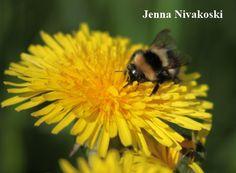 Bee Friend