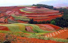 """Campos china. Dongchuan, cuya traducción significa """"tierra roja"""", se encuentra a 4 horas de la ciudad de Kunming, la capital de la provincia de Yunnan, en el sudoeste de China."""