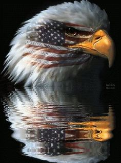 Our Country and Soldiers are being watched over by air and sea until His return. Patriotic Pictures, Eagle Pictures, I Love America, God Bless America, Eagle Art, Gif Animé, Animated Gif, Home Of The Brave, American Pride