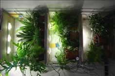 indoors plants for low lights - Google Search