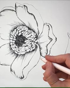 Skillshare Class on how to draw & shade a flower on the Ipad in Procreate by Angele Kamp. Music: My Aching Heart Flower Drawing Tutorials, Flower Sketches, Art Tutorials, Pencil Art Drawings, Drawing Sketches, Heart Drawings, Ipad Art, Botanical Drawings, Drawing Techniques