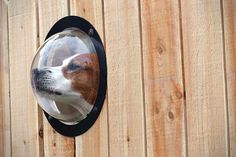 Dog Gear: 15 Awesome Accessories for Man's Best Friend