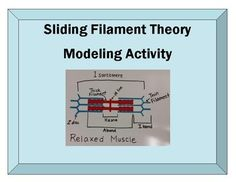 Muscle Contraction Modeling Sliding Filament Theory With Paper