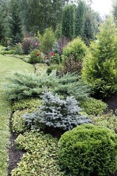 Coming across rock landscaping ideas backyard can be a bit hard but designing a rock garden is one of the most fun and creative forms of gardening there is. Privacy Landscaping, Landscaping With Rocks, Outdoor Landscaping, Front Yard Landscaping, Outdoor Gardens, Landscaping Ideas, Evergreen Landscape, Evergreen Garden, Garden Shrubs