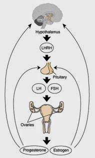 Dessa forma na sequência, a Glândula hipófise e locais de produção do IGF Cartilagem, condição clínica DGH idiopática devido à redução da secreção de GHRH através de seu eixo o que mais ou menos coincide com as atitudes tomadas na região superior; TU Hipotalâmicos ou defeitos congênitos como Displasias, Traumas; Cirurgia ou TU da Glândula Hipofisária; defeitos de genes do GH-hormônio de crescimento ou fatores de transcrição hipofisários