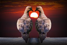 Mourning Love Dove Birds watching the Sunset amidst the shape of a Valentine Heart No.10012 - A Fine Art Bird Photograph