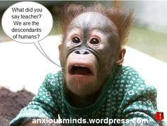 Inside a monkey's mind