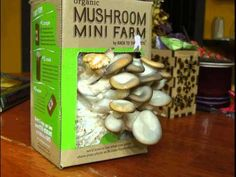 growing mushrooms indoors - Google Search