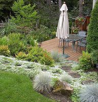 Ground cover in a sloped garden