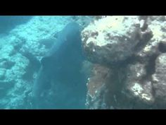 ▶ Hanauma Bay White Tip Shark at Sand Man's Patch - YouTube