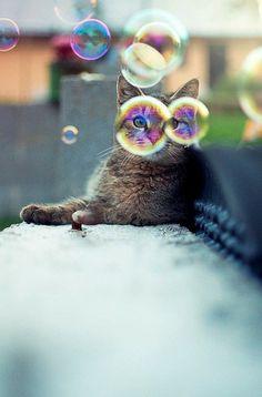 Saviez-vous que certains chats adorent jouer avec des bulles de savon ?  Si vous voulez faire l'expérience avec votre Minou mais que vous avez peur de tacher vos meubles, essayez sur la terrasse, le balcon... ou la salle de bain !  #chat  #chaton #bulle #arcenciel #rainbow