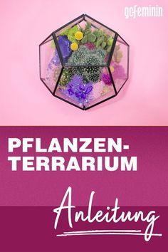 Pflanzen im Glas: Anleitung für ein ewiges Terrarium Tricks, Terrariums