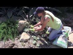 Succulent Garden Design Secrets - YouTube