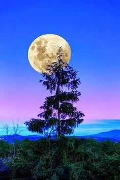 Stars Night, Stars And Moon, Moon Photos, Moon Pictures, Beautiful Moon, Beautiful World, Shoot The Moon, Moon Shadow, Photos Voyages
