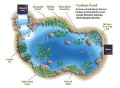 How to Plant a Medium Pond