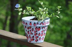 paint pots and decorate with ladybugs; then plant with dwarf sunflower seed