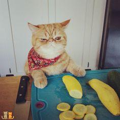 A beautiful day and I'm stuck with cooking duties... #exoticshorthair #cat #cute #flatface #kitten #meow #pet #mreggs #catlover #exoticsofinstagram #smushface #weeklyfluff